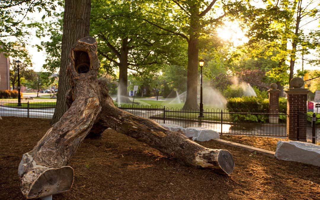 natural robinia playground