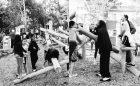 albert street log natural playground