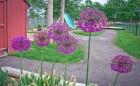 Lakeshore Cooperative Nursery