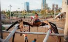 oklahoma city playground wolf spider log climber