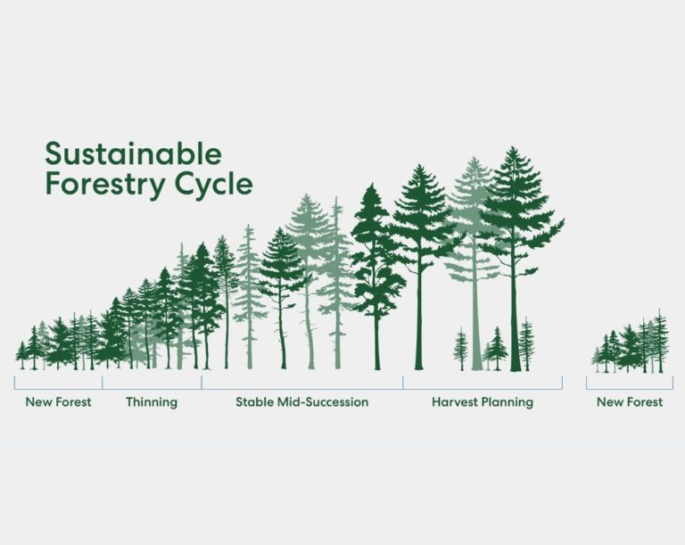 Sustainable Forerestry Cycle: New Forest, Thinning, Stable Mid-Succession, Harvesting Planning, New Forest